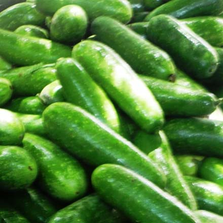 Bottle Gourd, Wholesale Organic Vegetables from Bangladesh